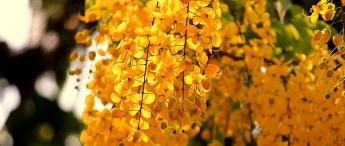秋の豊かさ 忙しさや手ごたえの質がかわる